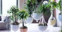 Hangplanten / Planten die uit zichzelf hangen of opgehangen worden in brede zin, voor elk interieur. Aan het plafond, aan de muur, uit de kast enzovoort.