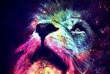 Lionheart ❤️