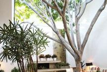 Gardens and Outdoor living Spaces