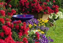 Wonderful Gardens /