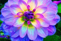 Flower Power / by Melanie Malsam