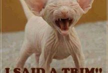 Funny, haha, LOL, / These tickled my funny bone.  / by Sharon Marson