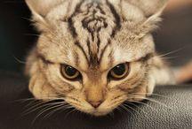 =^..^= Meow =^..^=