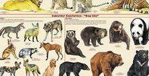 Encyklopedia Ilustrowana - Zwierzęta Świata