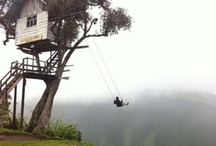 treehouse & other...