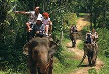 Places to Visit / naik gajahdi bali
