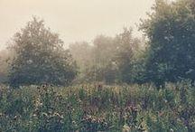Country, nature, animals