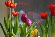 Flores y sus encantos