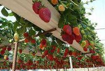 Garden/Yard Ideas / by Tracy Roller
