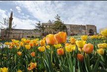 Konya - Lale - Tulip - Garden - Bahçe / Konya da Çiçek ve Lale Tulip and Konya