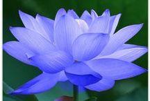 Virágok - Flowers / A természet csodái