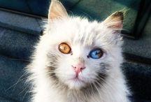 """Animals / """"Gli occhi di un animale hanno il potere di parlare un grande linguaggio."""""""