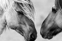 """Horses / """"Quando montiamo un cavallo ne prendiamo in prestito la libertà."""""""