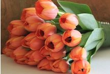 Flowers: I love tulips :) / Flowers  / by Patrizia Rago