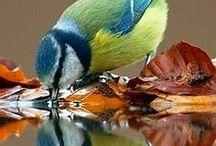 Lintuja, fåglar, birds