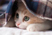 cute kitties / Poesjes