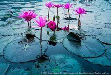 Love Nature / Beautiful pics of nature