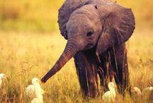 beautiful animals / Mooie diertjes