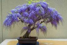 Artistic and Wonderful Bonsai
