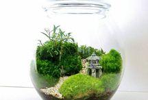 terrarium's