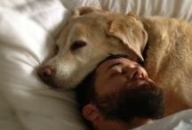 Il miglior compagno / I cani sono animali disponibili, produttori indefessi di affetto. Pericolosi.
