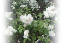 Roses   dewaddentuun.blogspot.nl / Een prachtige tuin.. neem er eens een kijkje! De openingstijden staan op de blog of volgens afspraak.  http://dewaddentuun.blogspot.nl