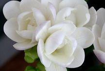 Flowers / :)