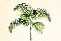 {Palm trees}