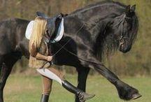 Hevoset / Ratsastus- ja hevosaiheisia asioita