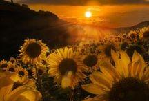 Aurinko / Auringon kuvia eri maisemissa