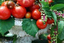 Plants, Herbs and Veggies