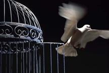jaulas.......cage......jaula........... / by Susana Agustoni