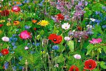 Puutarha / Garden / Mökkipuutarhan inspiraatiokuvia