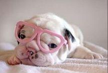Gafas de sol y nuestras mascotas. Sunglasses and our pets