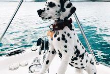 Chiots Puppy