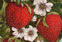 ягоды,фрукты,овощи
