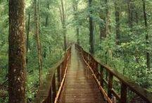 Florestas - Forest