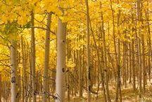 stromy / ... brezy