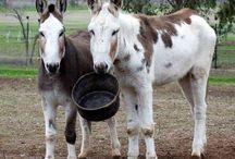 Donkey Âne ⚜️