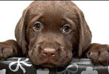 mascotadomestica.com / Todo lo que debes saber sobre animales y mascotas encontralo en www.mascotadomestica.com