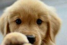 I love Furry (pets) :3 / by I am bear lover
