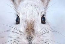 Кроляши