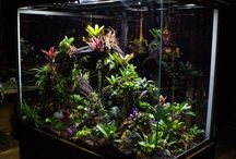 Terrariums / Aquariums