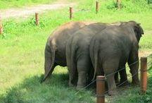 Elephants / by Lori Conley