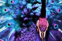Birds & Feathers / Beautiful birds...