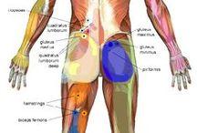 Anatomia nell'arte e nella materia medica / disegni di anatomia famosi