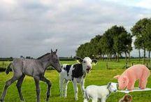 thema: boerderij / kleuterplein thema boerderij