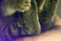 mój kochany malutki zwierzak