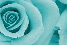 : Turquoise :