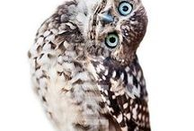 ": Owls : / ""At home, I love reaching out into that absolute silence, when you can hear the owl or the wind.""-  Amanda Harlech"